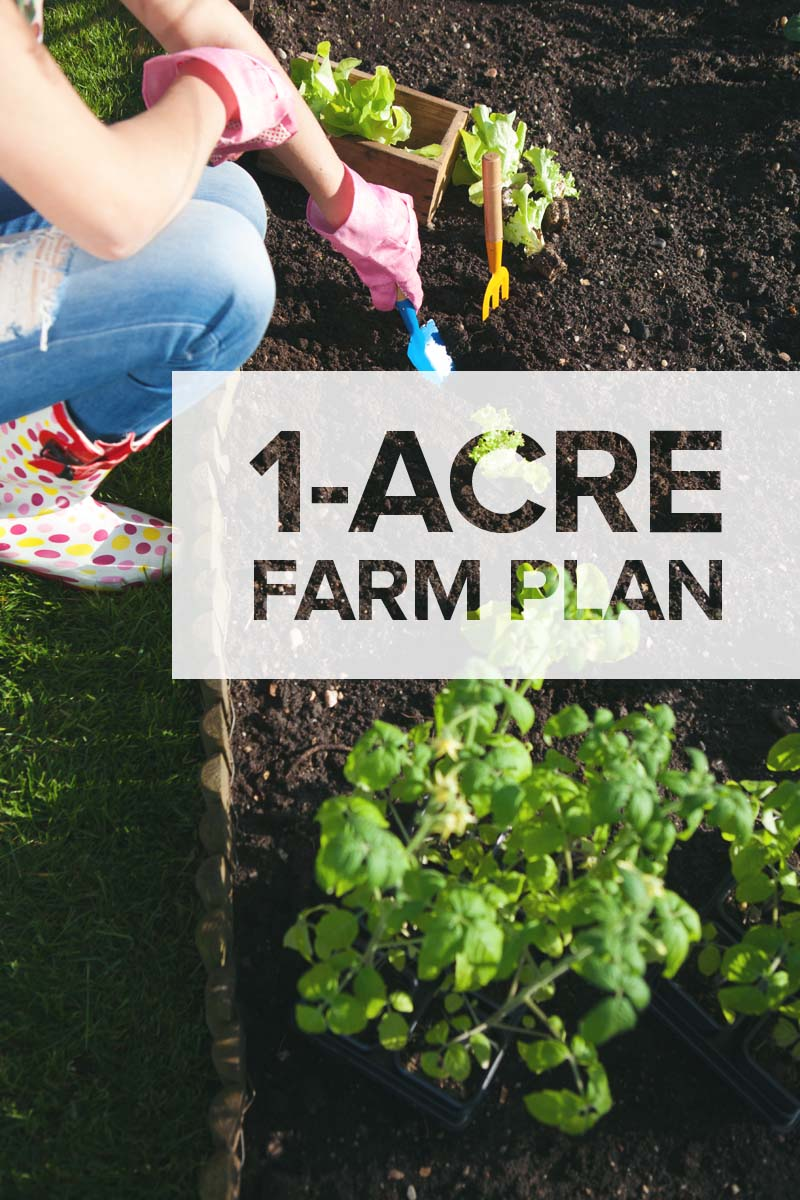One acre homestead here 39 s what to plant raise and build for Garden design ideas half acre