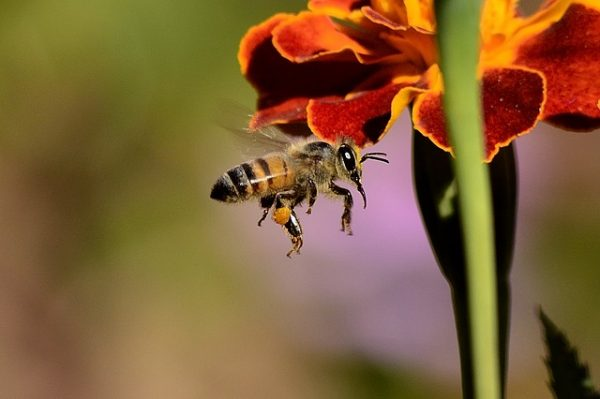 Honeybees, one of the best farm animals