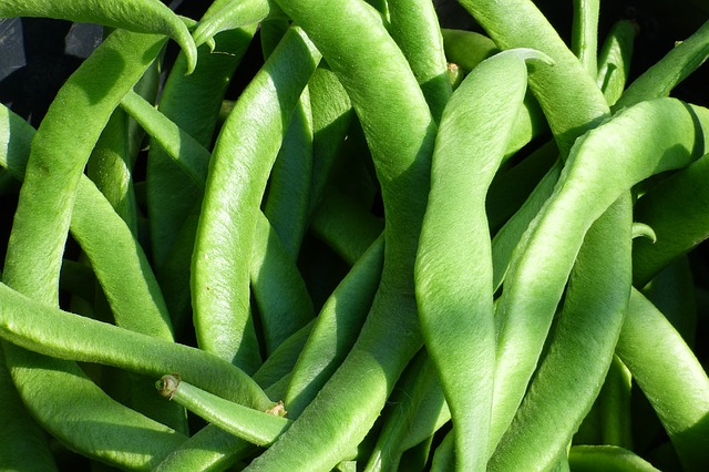 Pole Beans for small spaces and small gardens