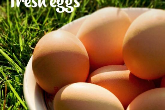 How to Collect, Clean, and Store Fresh Chicken Eggs