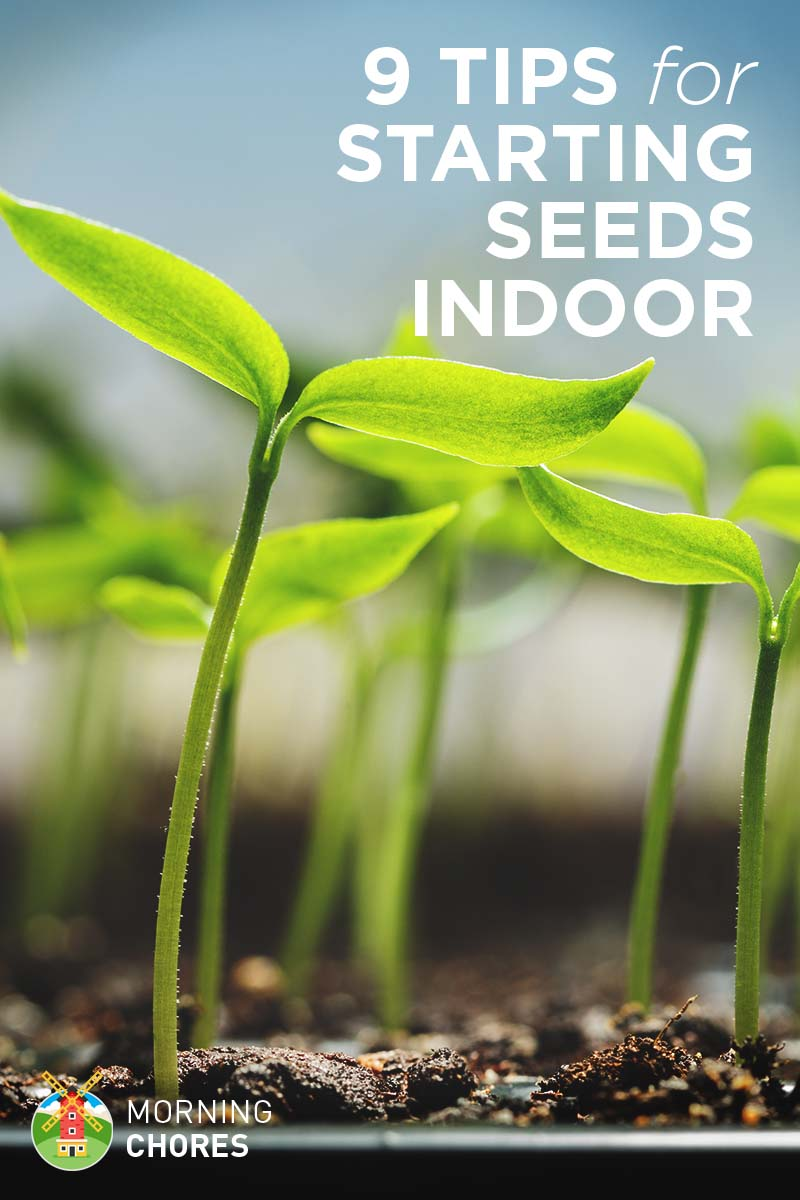 how to start growing vegetables from seeds