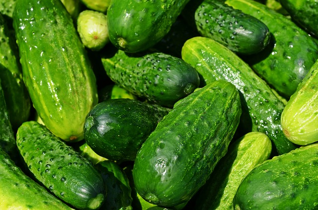 cucumbers are one of the easiest vegetables to grow