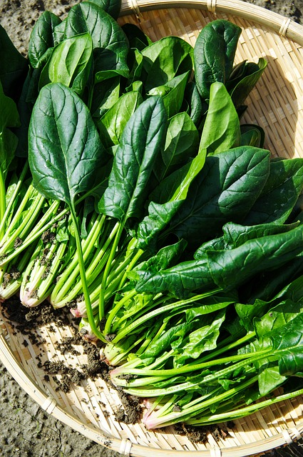 spinach is one of the easiest vegetables to grow