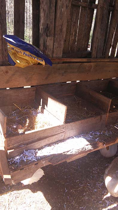 Inside the free chicken coop