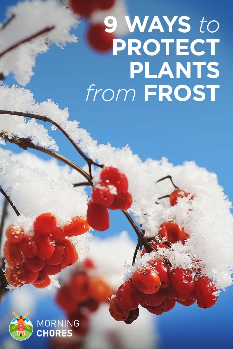 9 Ways To Protect Your Plants From An Unexpected Frost