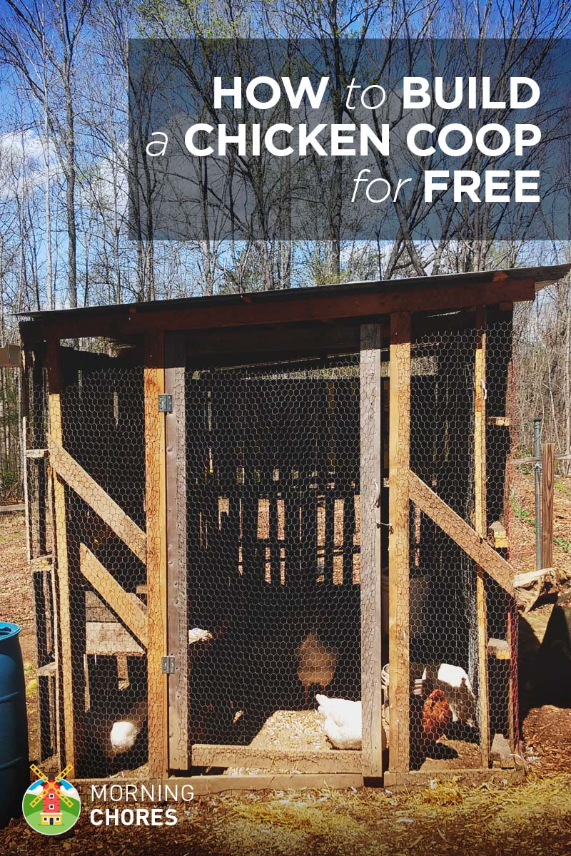 how to build a practically chicken coop in 8 easy steps