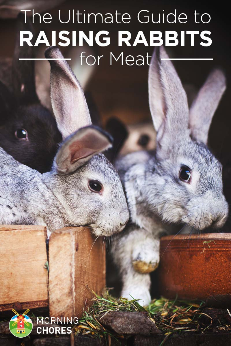 raising u0026 breeding rabbits for meat the ultimate guide