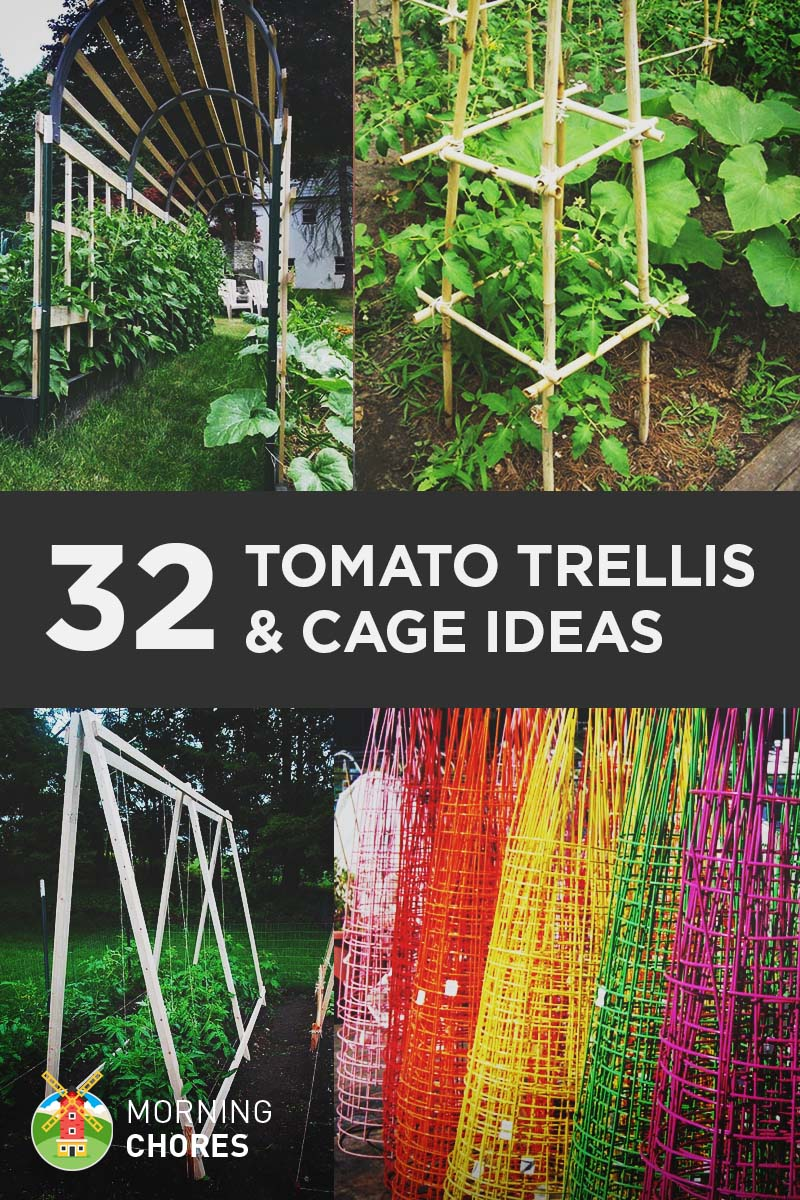 32 Free DIY Tomato Trellis & Cage Ideas to Grow Your Tomato Big and Healthy