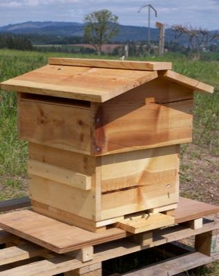 bee hive 10