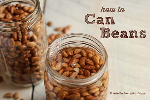 canning-beans