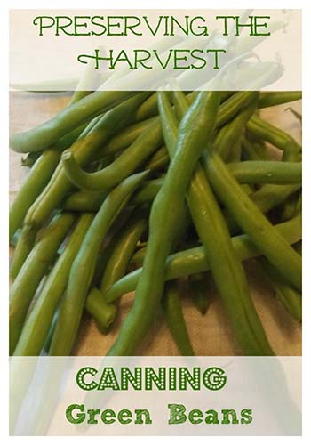 canning-green-beans for canning recipes