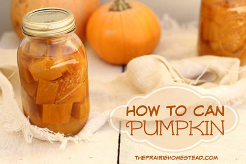 canning recipes for pumpkin