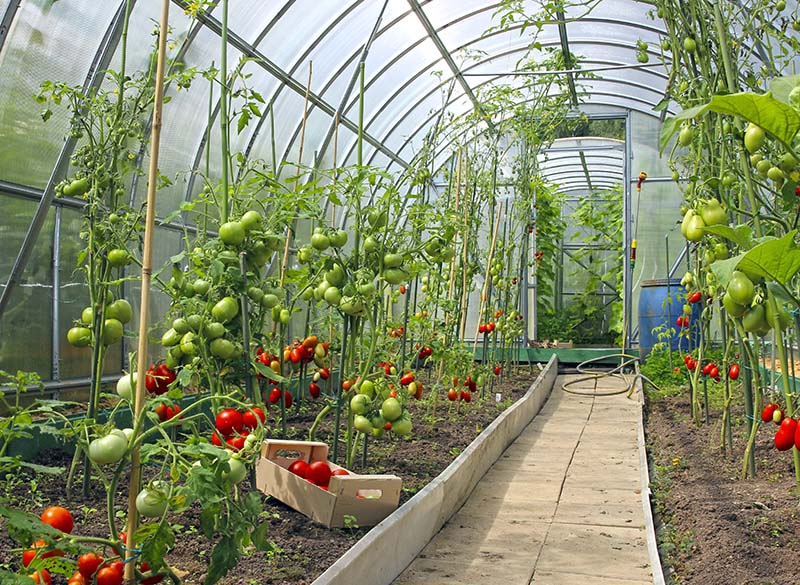 greenhouse gardening methods
