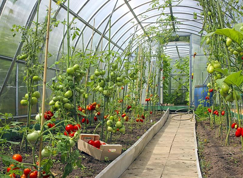 greenhouse gardening methods