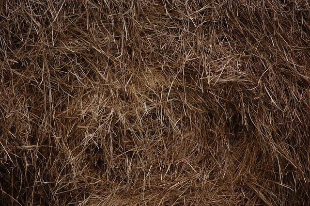 hay for feeding goats
