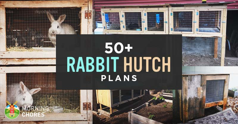 50 DIY Rabbit Hutch Plans to Get You Started Keeping Rabbits Rabbit House Pallets Design on pallet swing, wooden rabbit house, pallet tool, pallet media center, shed as a rabbit house, pallet building projects, pallet stool, cage plan rabbit house, cardboard rabbit house, flooring for indoor rabbit house, foam rabbit house, pallet jig, white rabbit house, pallet cabinet, pallet easel, pallet mailbox, plastic rabbit house, pallet rabbit cage, jack rabbit house, pallet rabbit hutches,