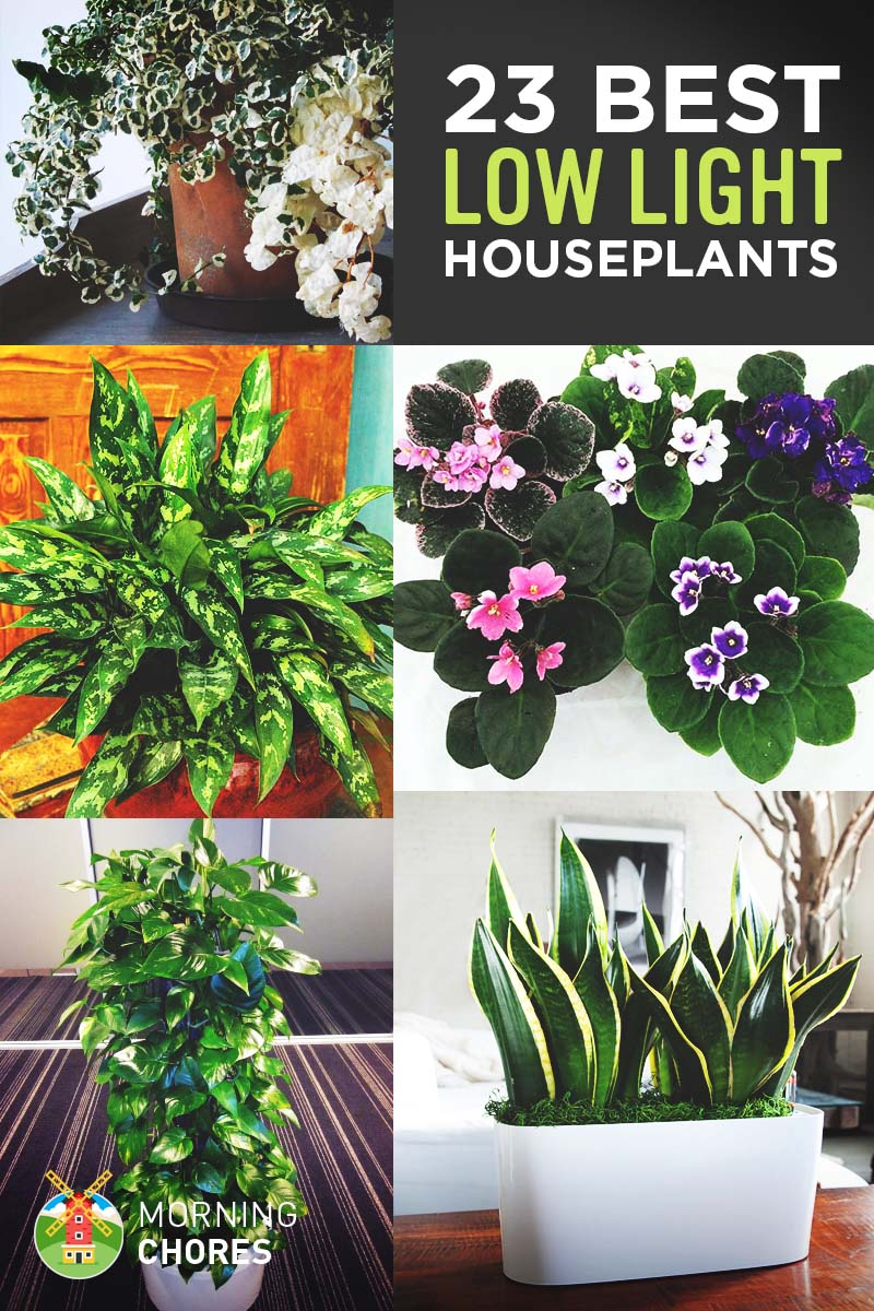23 low light houseplants that are easy to maintain even if for Easy to maintain outdoor plants