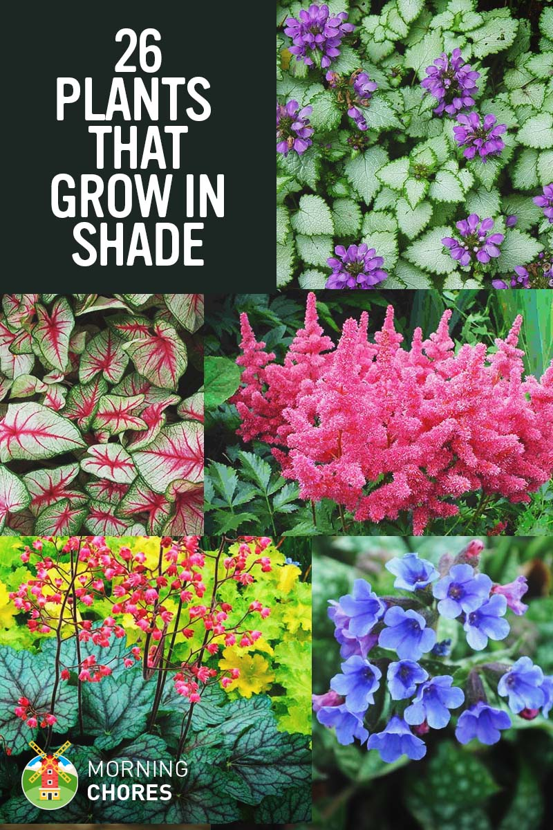 Exceptional 25 Gorgeous Shade Tolerant Plants That Will Bring Your Shaded Garden Areas  To Life