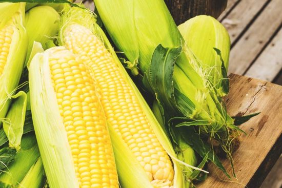 Corn: Planting Guide, Care, Problems and Harvest