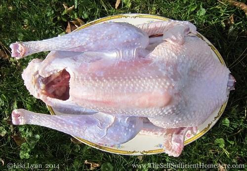 Butchered Turkey