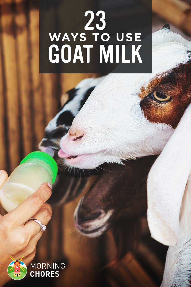 goat milk uses 23 genius ways to utilize goat milk