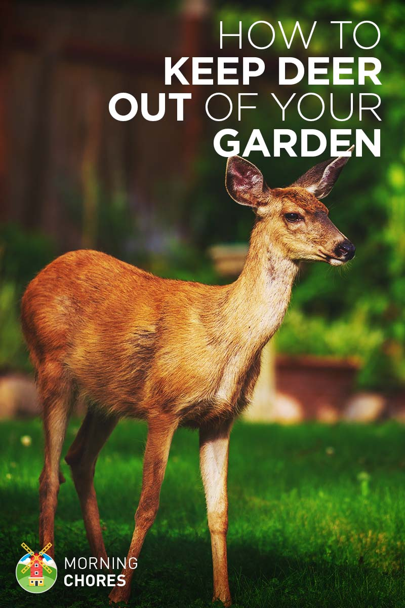 Deer Repellent 21 Ways To Keep Deer Out Of Your Garden Humanely