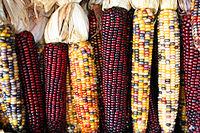 pod corn