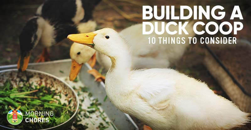 Building A Duck Coop, Best Bedding To Use For Ducks