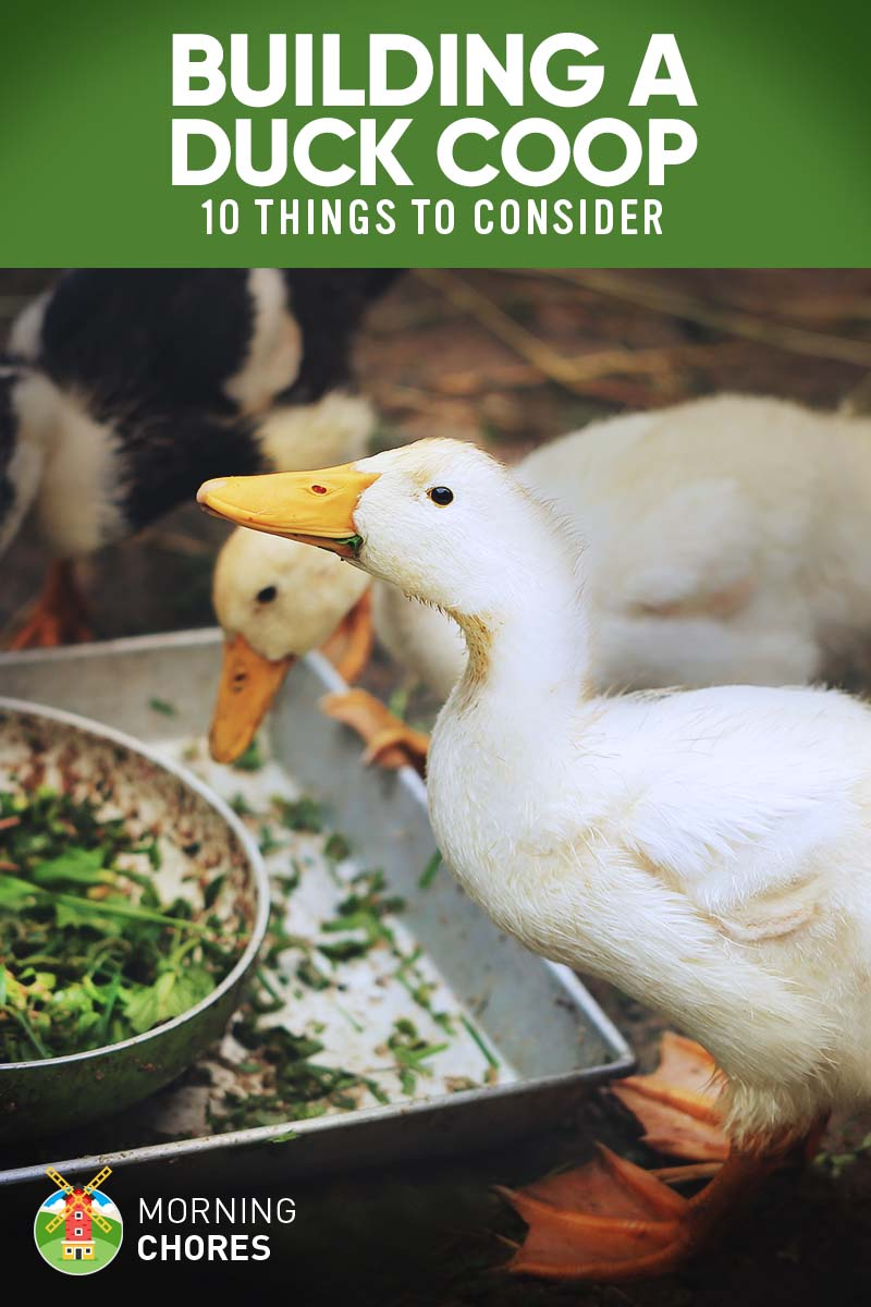 10 Important Things to Consider When Building a Duck Coop on brick duck house plans, wood duck house plans, pet duck house plans, wire duck house plans,