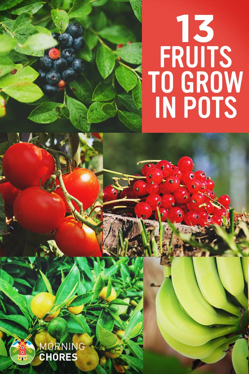 13 best fruits and berries you can easily grow in a