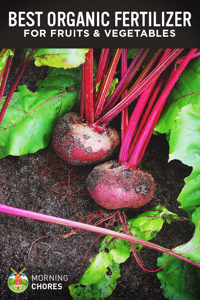6 Best Organic Fertilizer for Fruits and Vegetables - Reviews