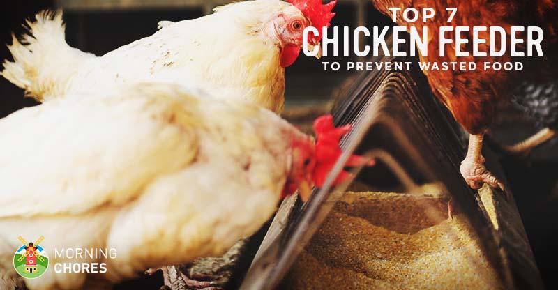 Chicken Feeders for Backyard Flock