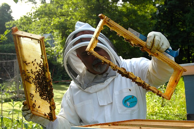 Beekeeper in a suit when beekeeping