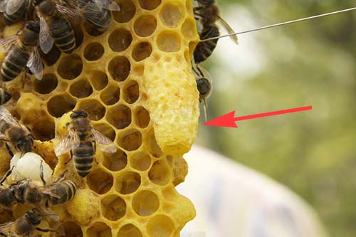 how to split your beehive