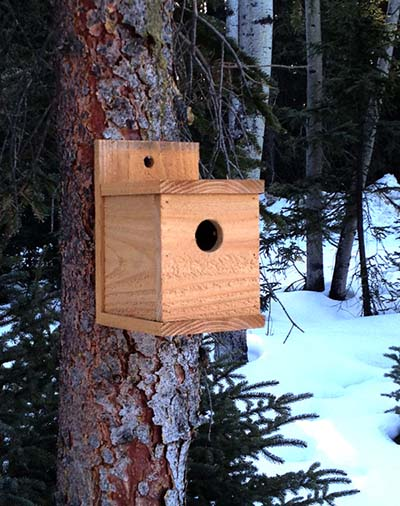 1-dollar birdhouse plans