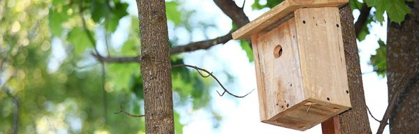 beginner birdhouse plans