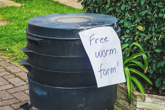 5 Best Worm Farm Kits for Garden and Fishing – Reviews & Buying Guide