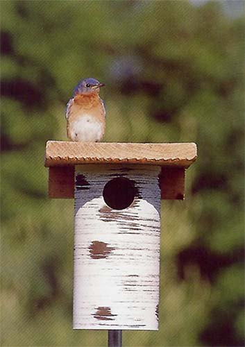 This site shows you how to use PVC pipes to build a unique nest box for your neighborhood birds.