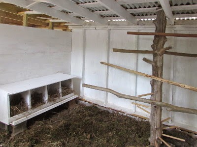 whitewashing inside a chicken coop