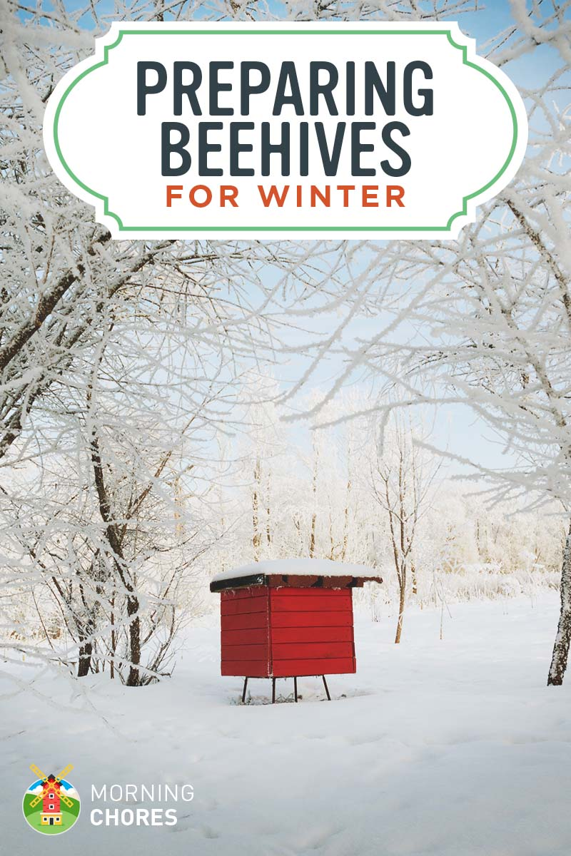 10 Steps To Wintering Bees To Keep Them Alive In The Northern Climates