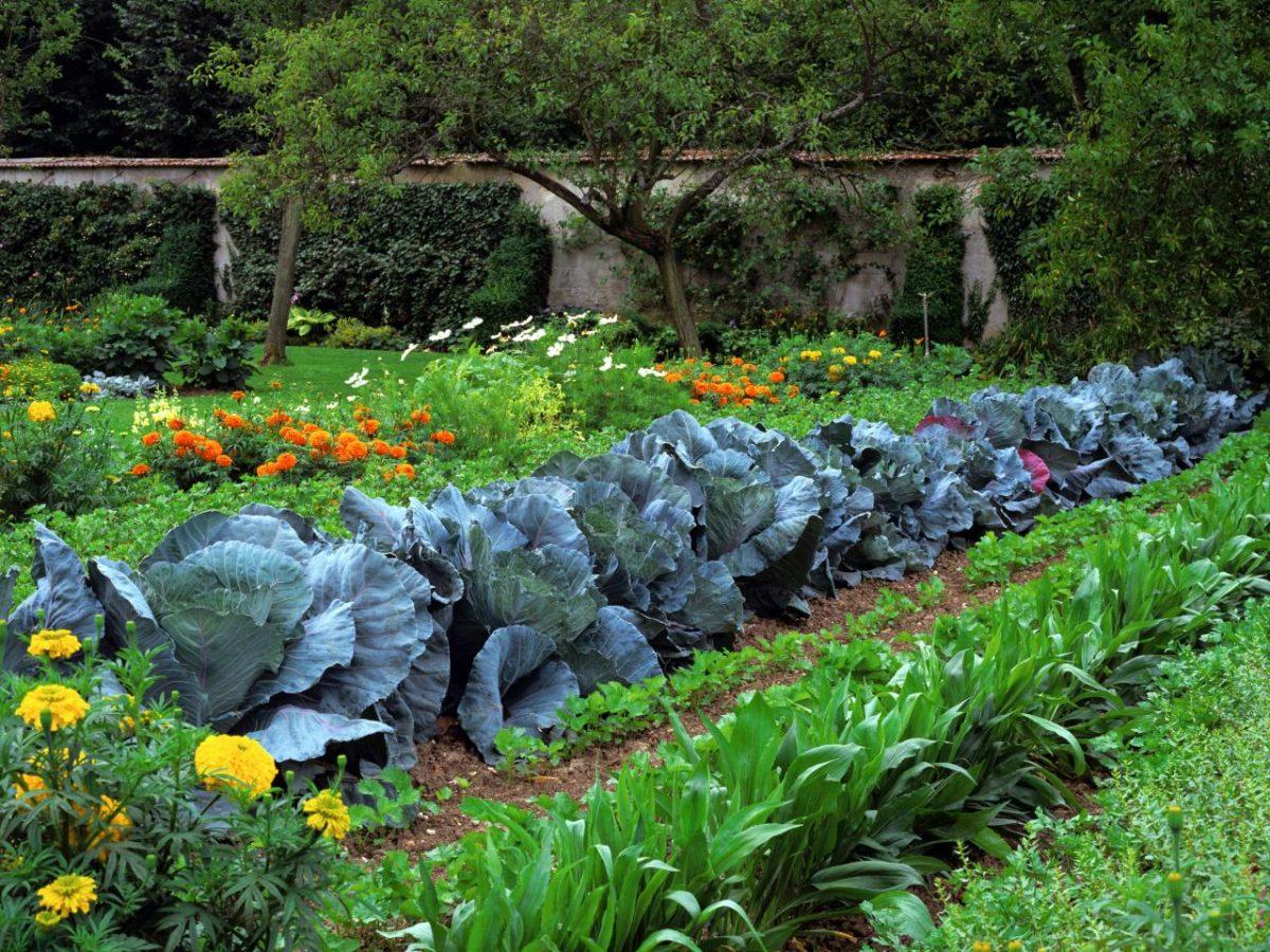 in-ground evaluate gardening methods