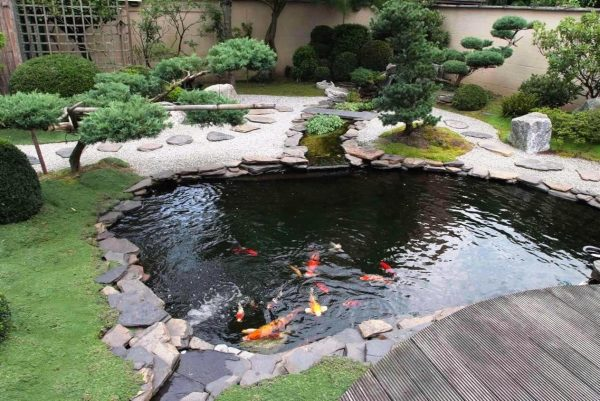 koi pond fish farming
