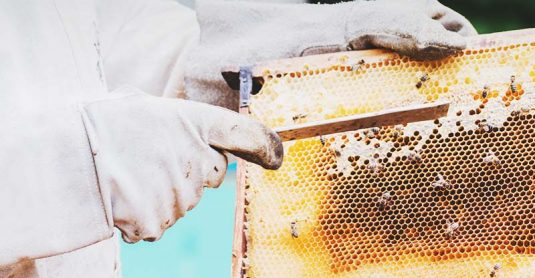 10 Tips for Cleaning Your Beekeeping Equipment