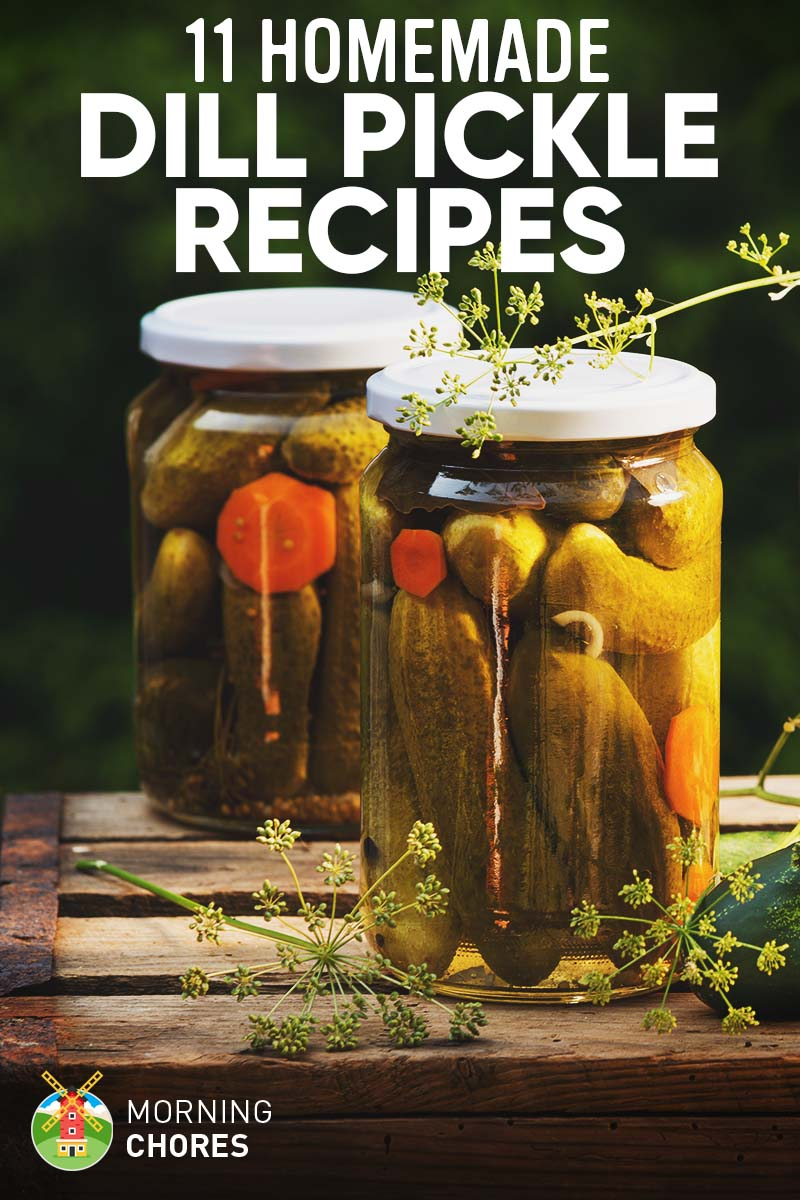11 Delicious Homemade Dill Pickle Recipes