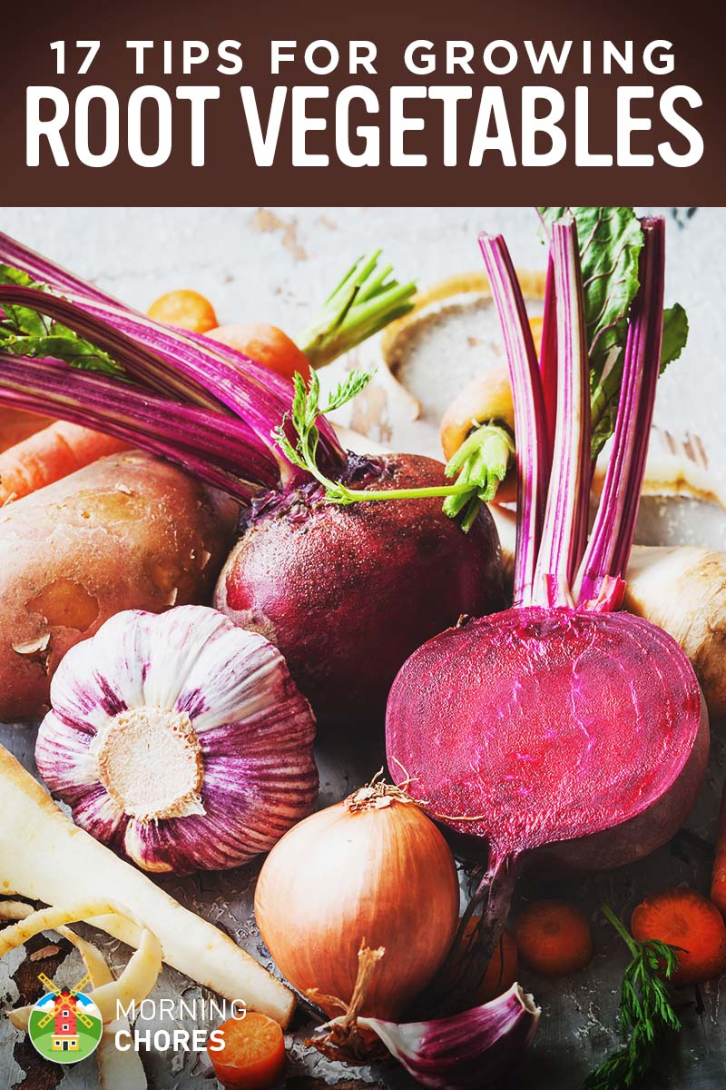17 tips for growing harvesting and storing root vegetables