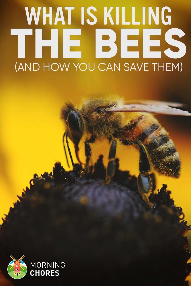8 things that are killing the bees and how can you save them