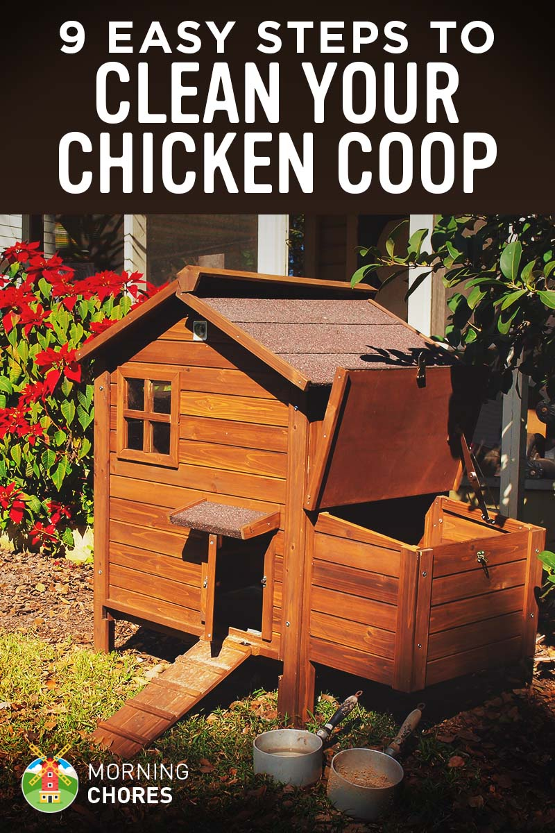How to Clean Your Chicken Coop in 9 Easy Steps