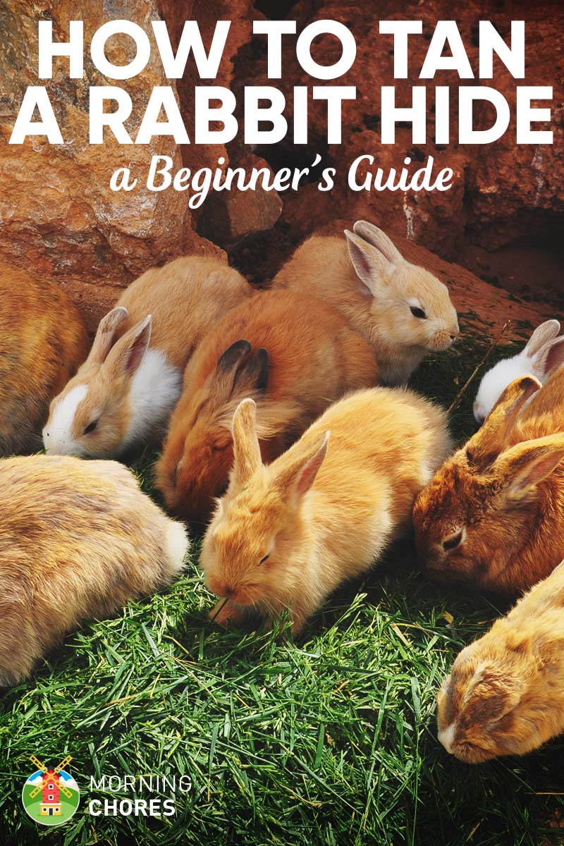 How to Skin and Tan Rabbit Hides