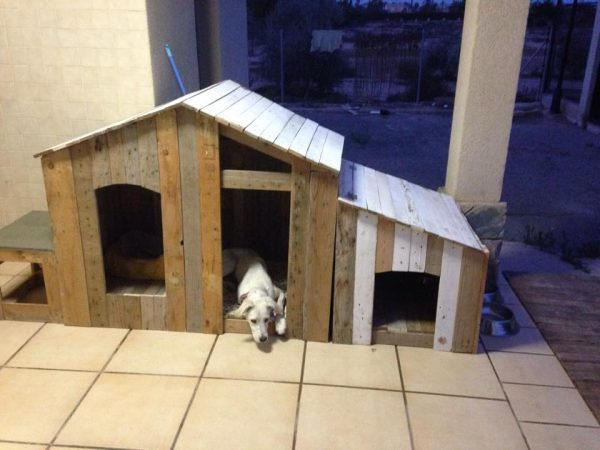 36 Free DIY Dog House Plans & Ideas for Your Furry Friend Xlarge Dog House Plans on extra small dog house, xxl dog house, grey dog house, deluxe dog house, custom dog house, wide dog house, carhartt dog house, pink dog house, jumbo dog house, red dog house, medium dog house, normal dog house, mini dog house, giant dog house, yellow dog house, adult dog house, black dog house, xxxl dog house, xl dog house,