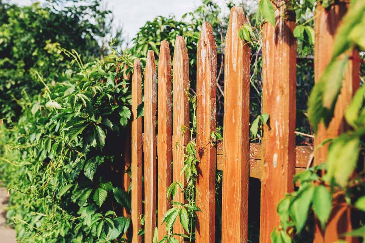 9 Ingenius Pallet Fence Ideas Anyone Can Make Wood Pallet Fence Backyard Fences Fence Design